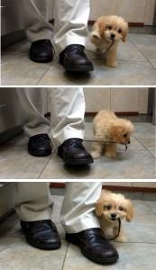 bear eating dr. wefer shoes