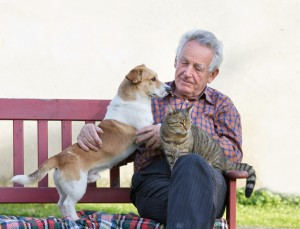 shutterstock_MAN WITH CAT AND DOG ON  BENCH