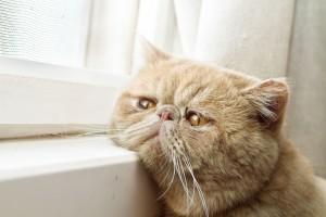 123RTF Old cat