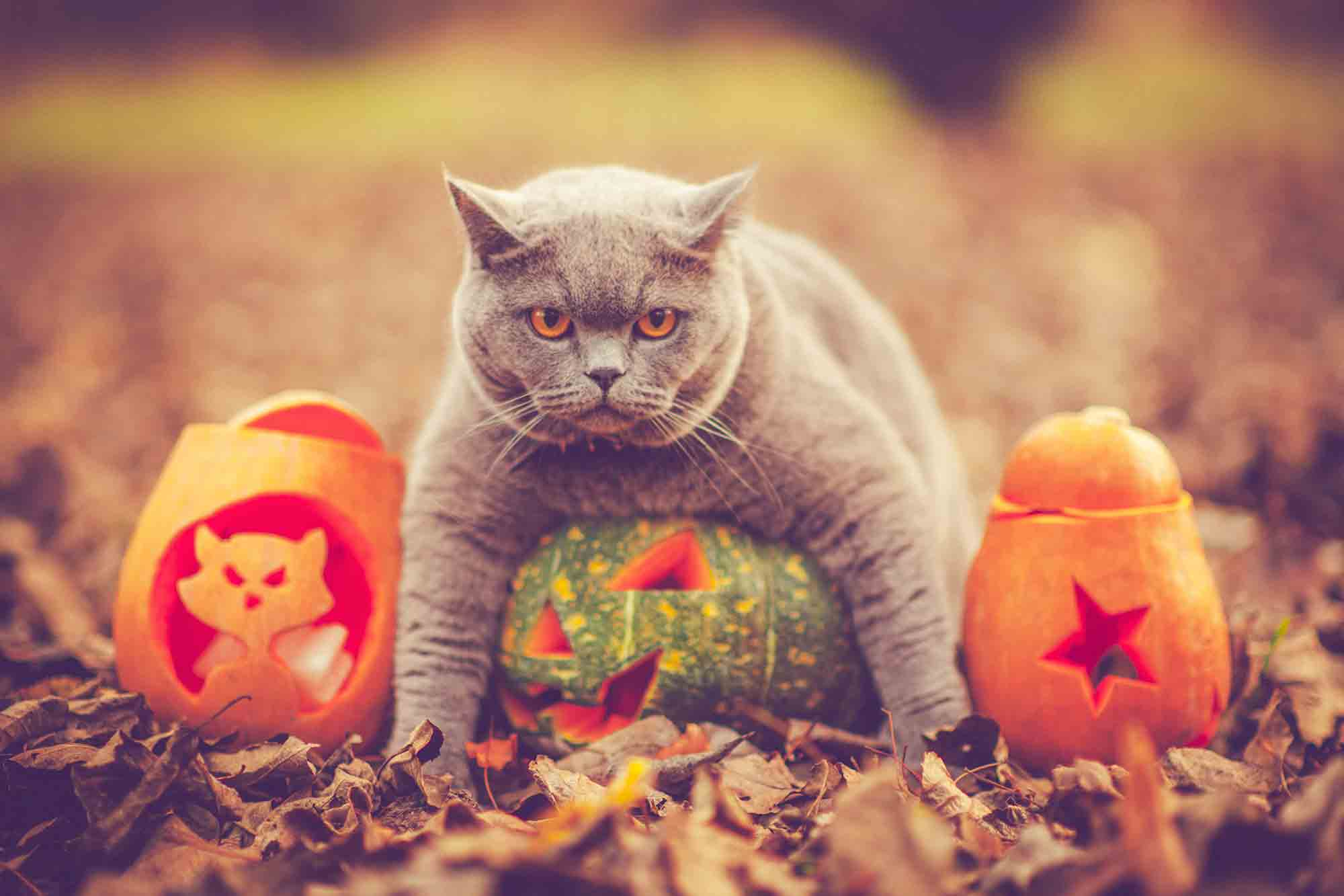 preparing pets for halloween