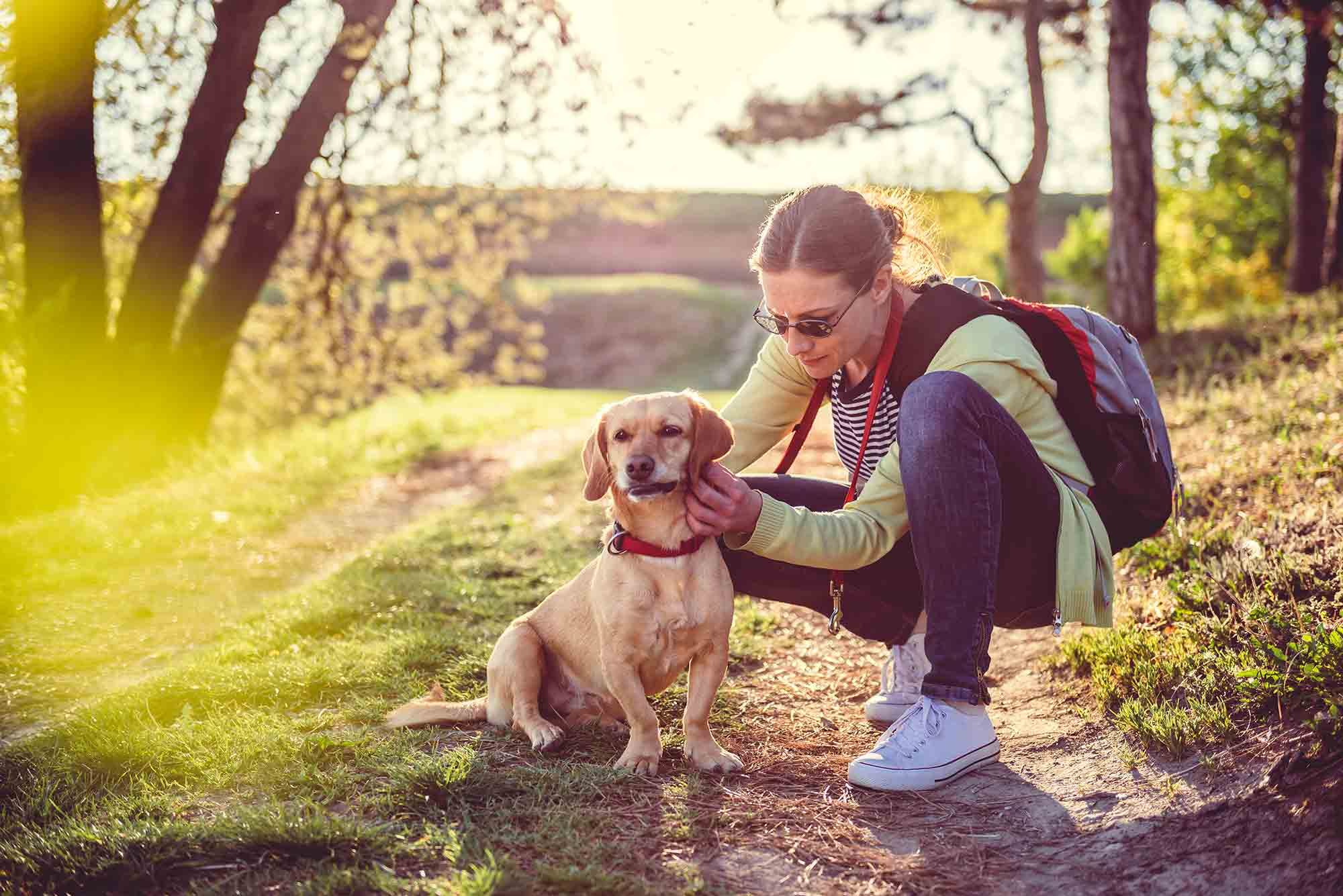 Lyme disease in pets is a threat to pet health