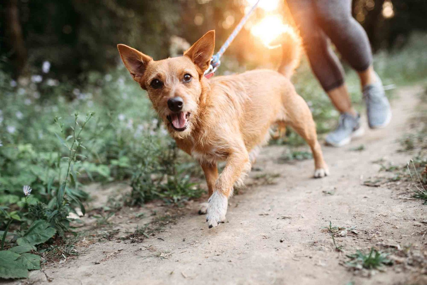 Exercise for you and your pet is key to both human and pet health