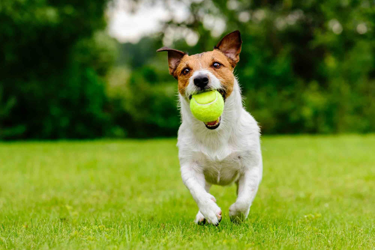 Outdoor safety and your pet is an important part of keeping your pet healthy and happy.