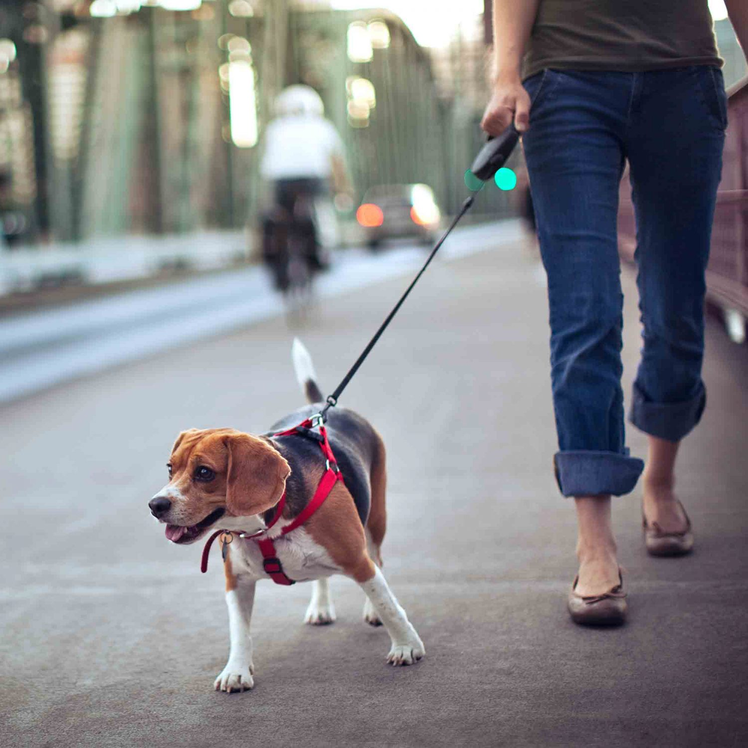 retractable leashes are a serious threat to pet health and pet safety