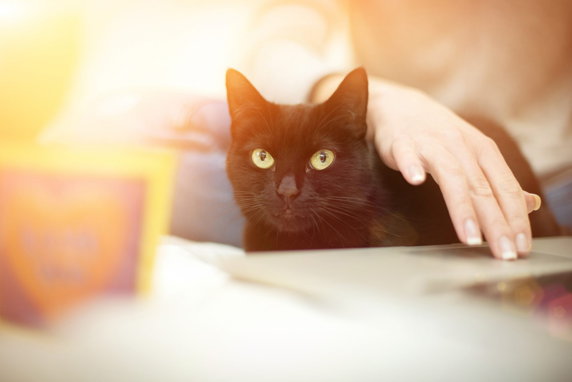 Pet health information online isn't always credible. Call a local veterinarian.