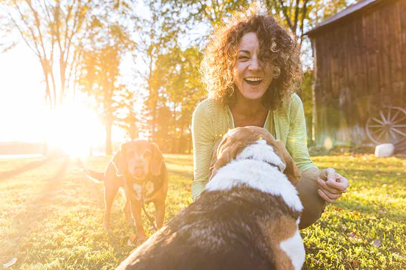 Fall pet safety can make autumn with pets fun!