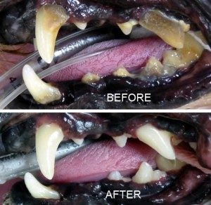 bLOG PIC DENTAL BEFORE AND AFTER