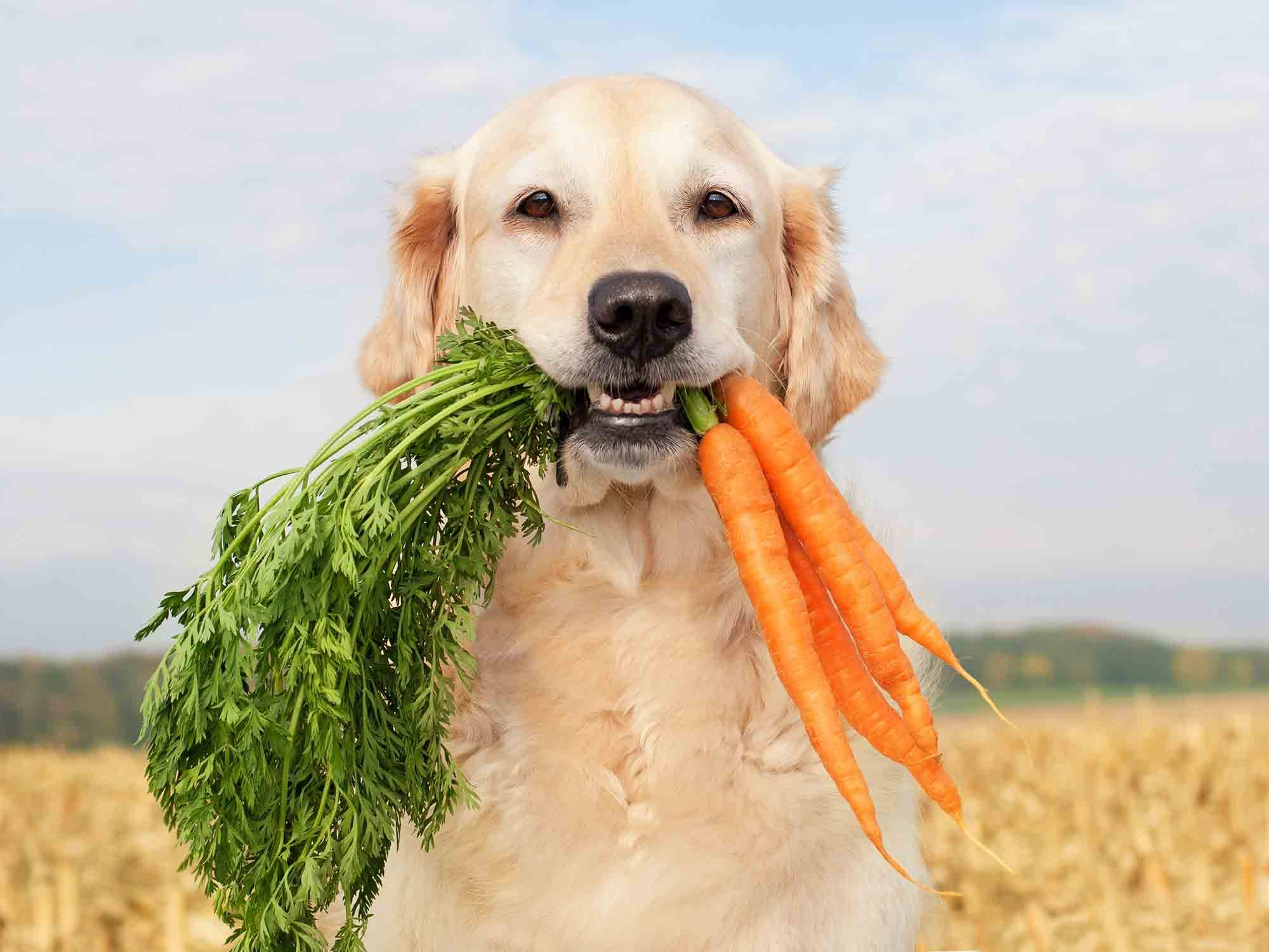 weight management in pets