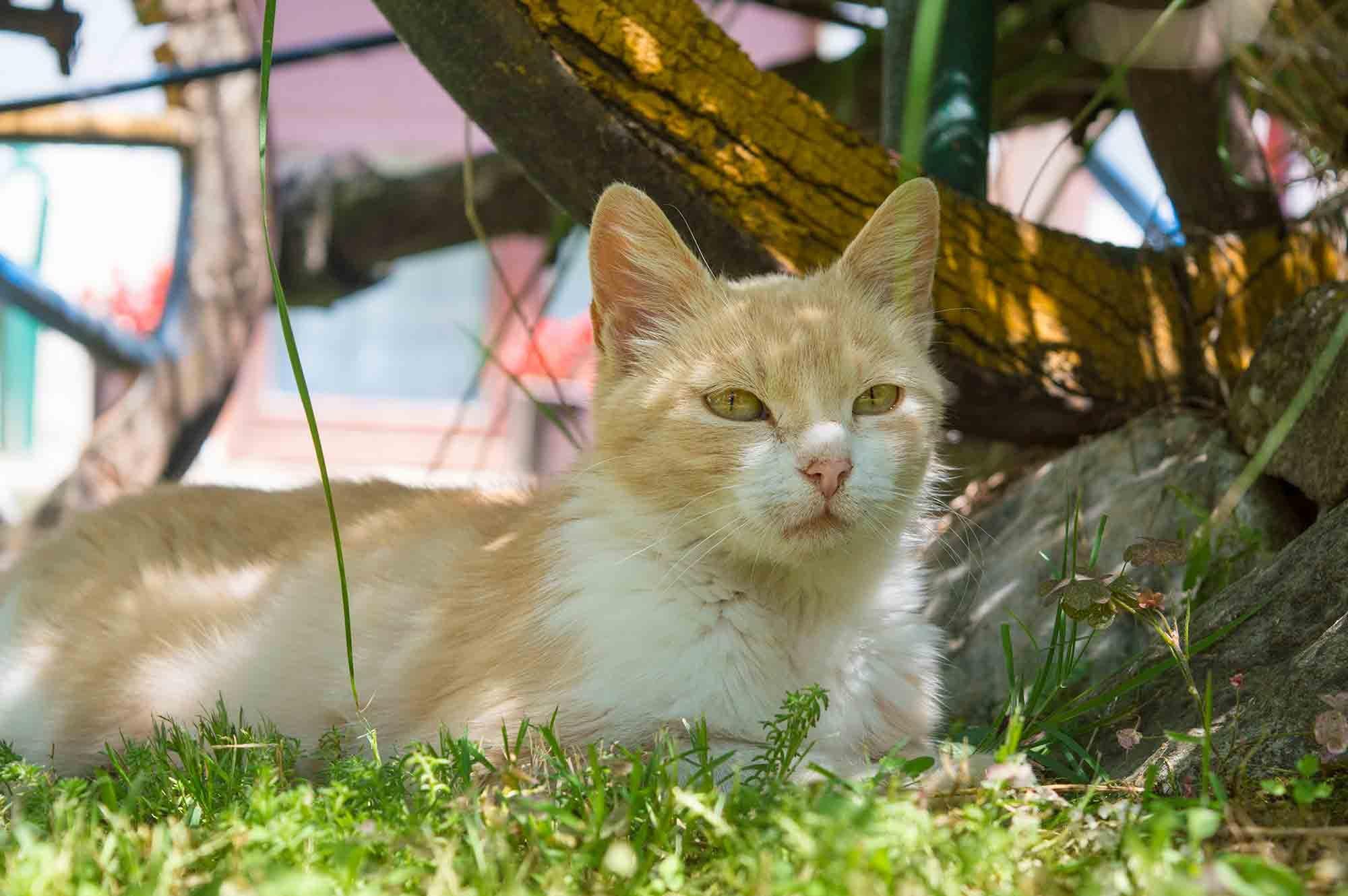senior pets have special pet health considerations; ask a veterinarian