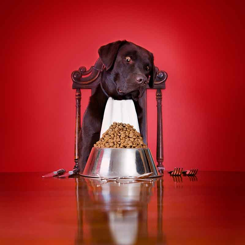 Pet nutrition does not always follow fad diets for pets