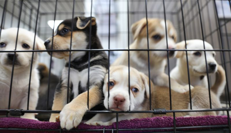 puppies in cage
