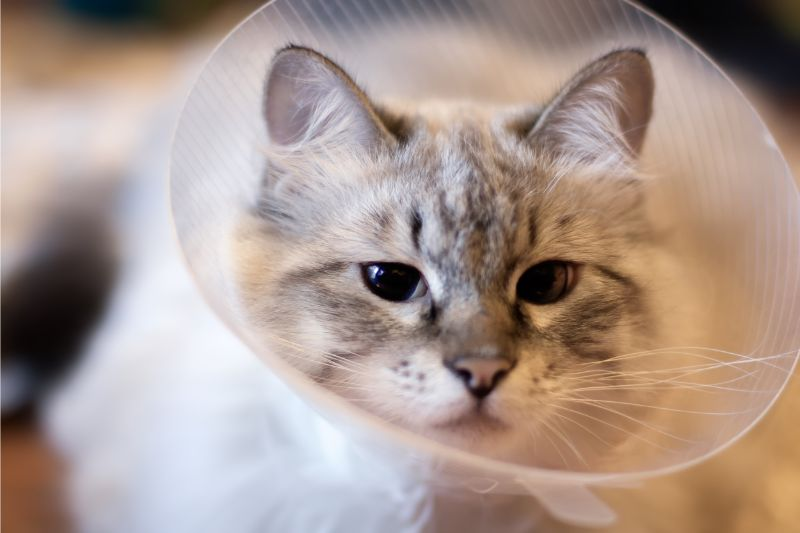 cat with cone on neck