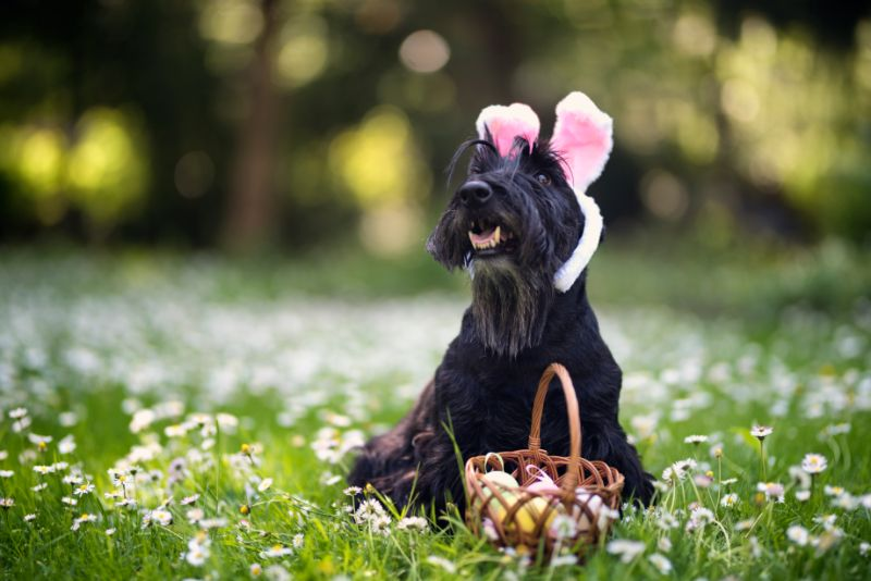dog with easter costume