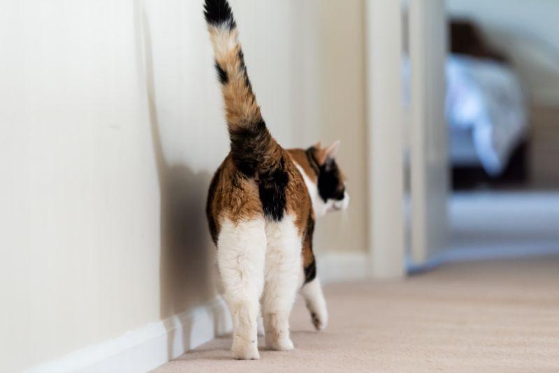 cat behind