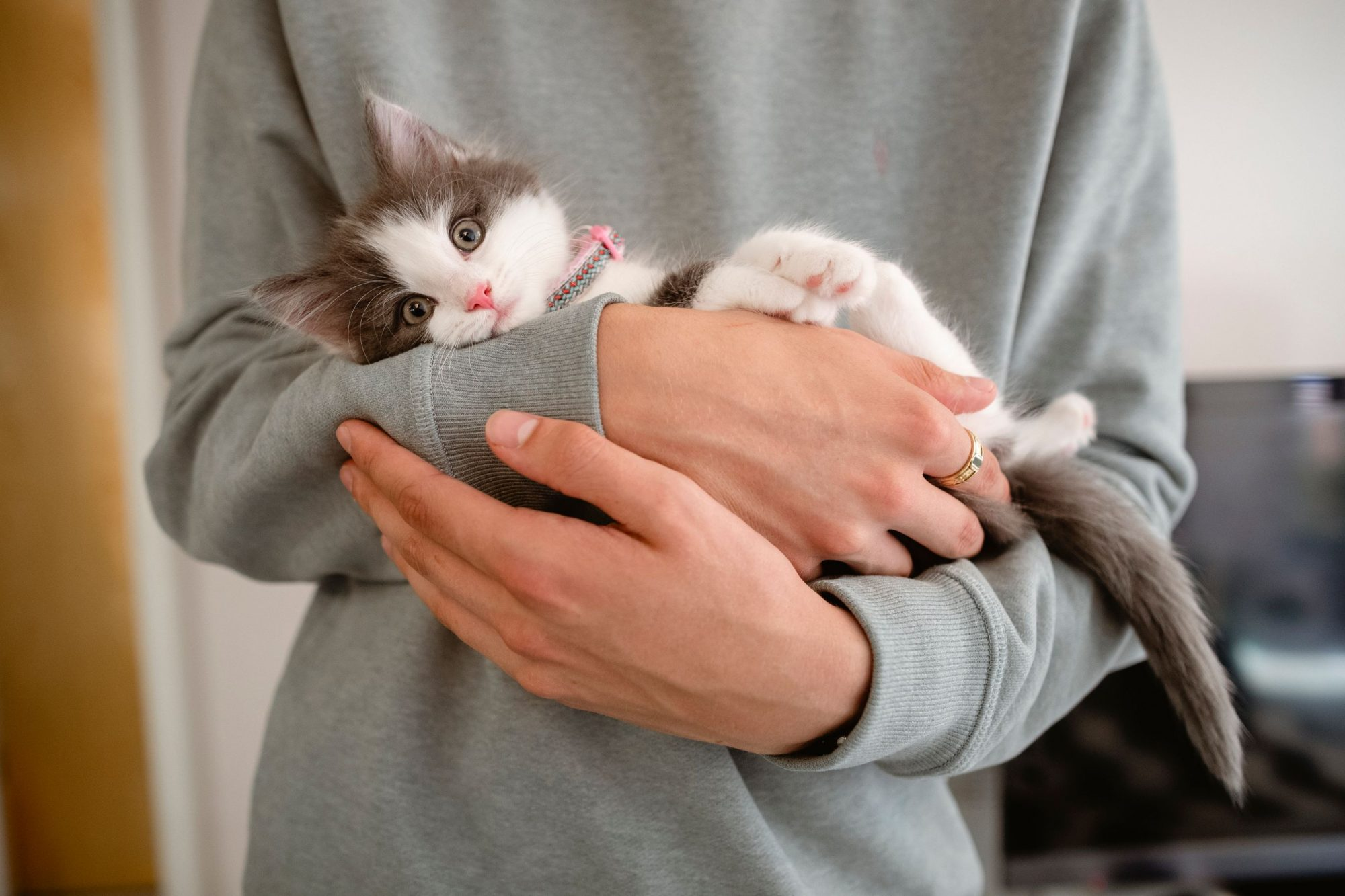 Kitten being cradled in owners arms.