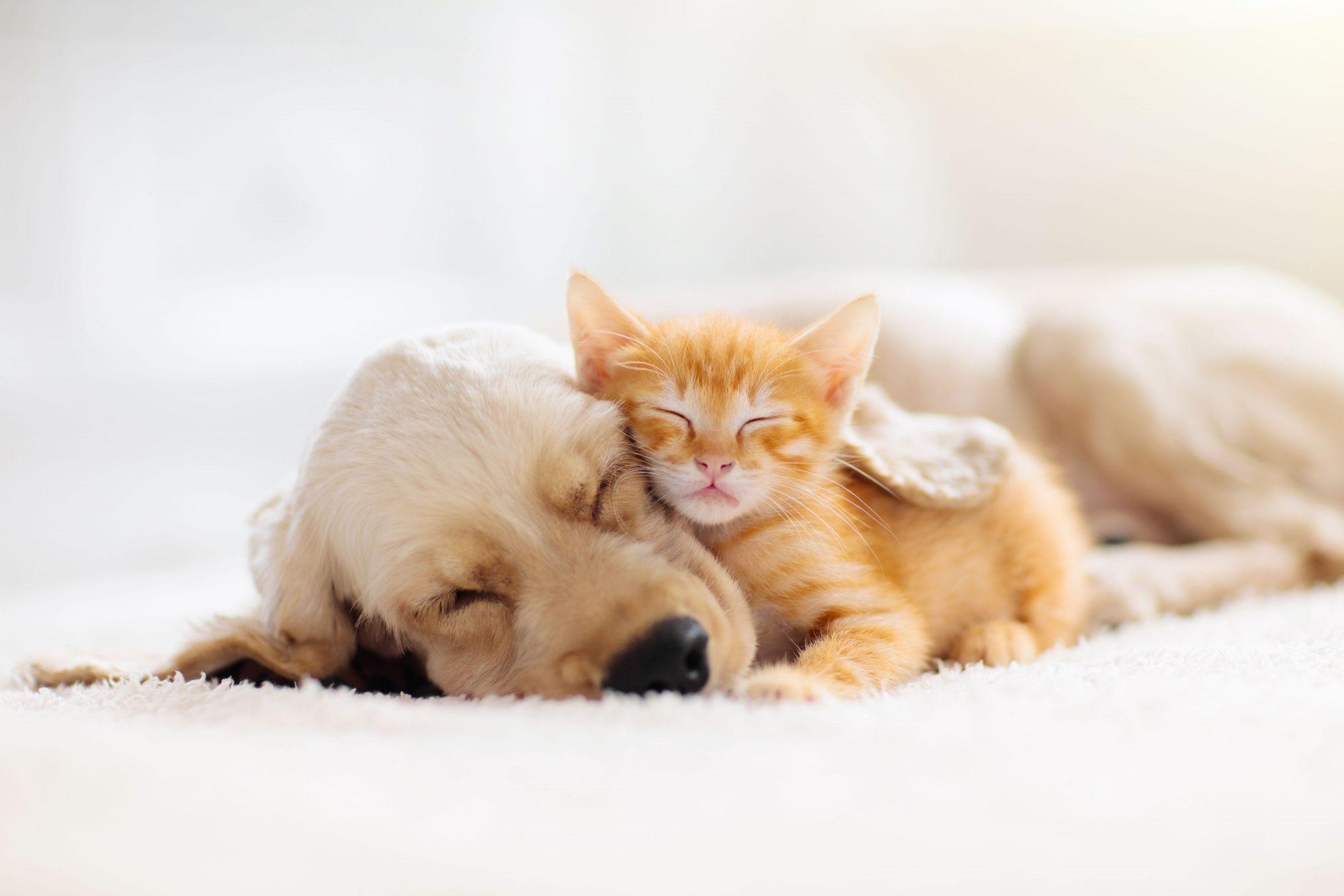 Cat and dog sleeping.