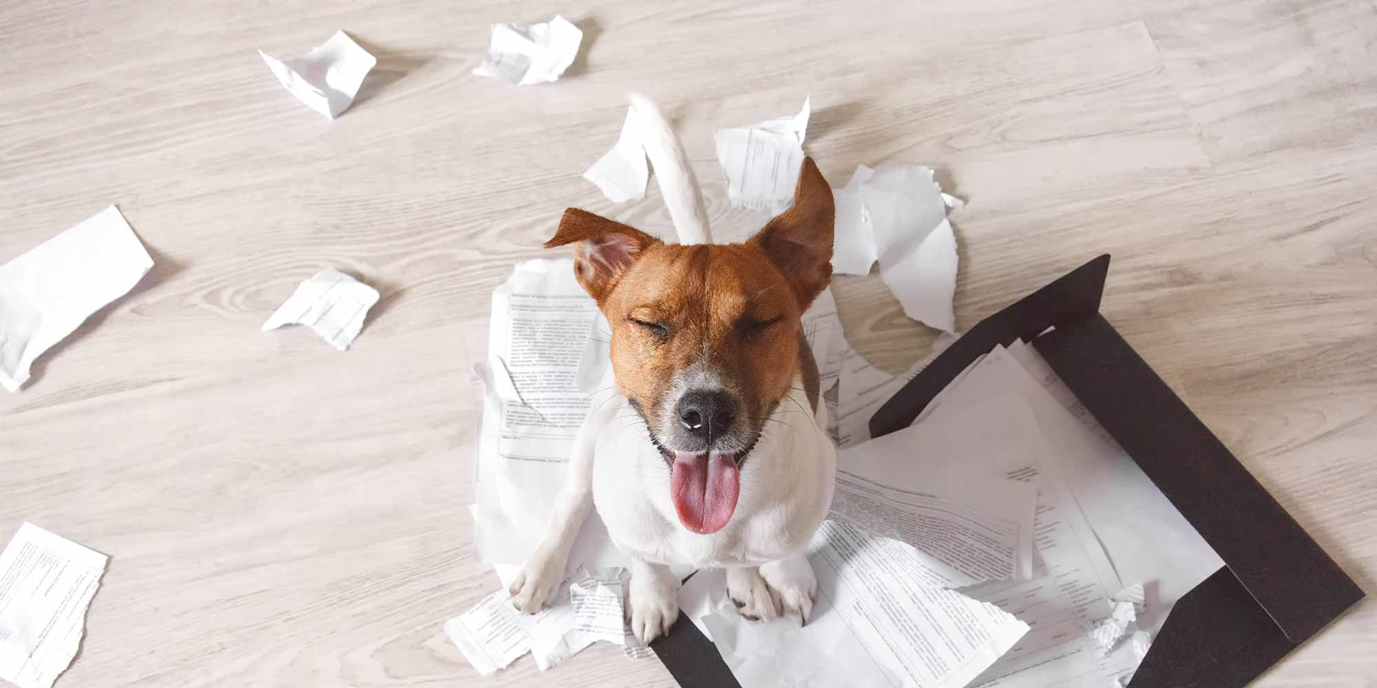 Happy dog chewed up papers